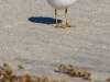 October beach birds-4710